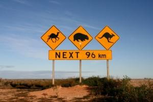 whv_pvt_australie_panneaux_kangourou_chameau_wombat-800x533-300x199